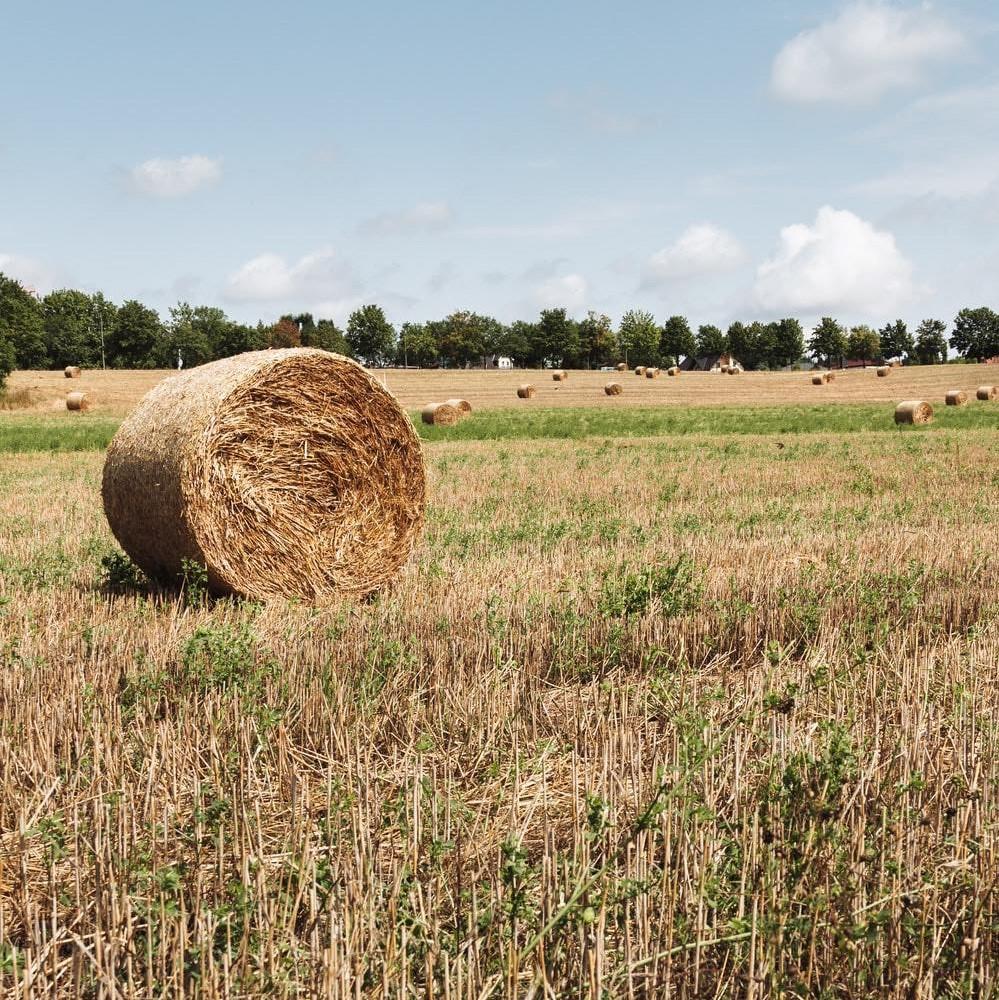 hay-ranchworx global