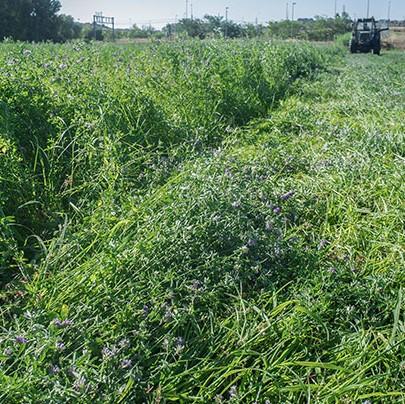 ranchworx alfalfa
